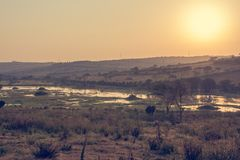 Spectacular savannah landscape of sun raising above marshes. stock images
