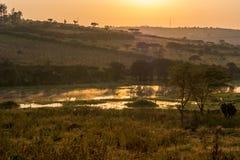 Spectacular savannah landscape of sun raising above marshes. royalty free stock photography
