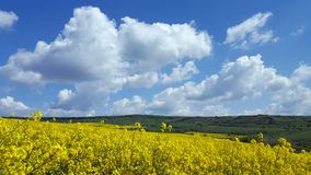 Spectacular scenery rape field Royalty Free Stock Images