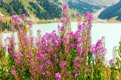 Spectacular scenic Big Almaty Lake ,Tien Shan Mountains in Almaty, Kazakhstan,Asia. At summer royalty free stock image