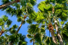 Spectacular sky view about a palms roof stock images