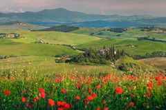 Spectacular spring Tuscany landscape, beautiful field of red poppies and typical stone house near Siena touristic city, Pienza, royalty free stock photography