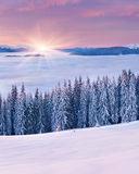 Spectacular sunrise among a sea of fog in the winter Royalty Free Stock Image