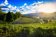 Spectacular sunset over the green vineyards of Langa Piedmont stock image