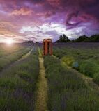 Spectacular sunset over lavender fields