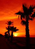 Spectacular tropical sunrise Royalty Free Stock Photography