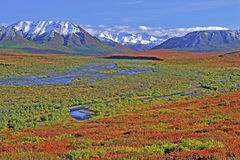 Denali National Park Alaska. Spectacular Tundra with Denali Range in autumn colors , Denali National Park Alaska, USA Stock Photography