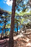 Spectacular view of Adriatic Sea from pine forest in Dalmatia royalty free stock photo
