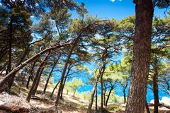 Spectacular view of Adriatic Sea from pine forest in Dalmatia royalty free stock images