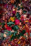 Spectacular View of Autumn Leaves stock images