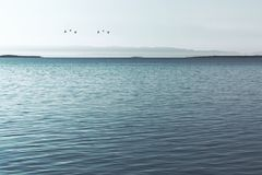 Spectacular view of an immense ocean. With migrating birds Royalty Free Stock Photos