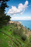 Spectacular view of italian pines mountain and sea. Spectacular view of italian pine woodland mountain and sea with cloudy blue sky. Colored summertime outdoor royalty free stock photos
