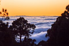 Sunset above the clouds with silhouette of pine trees Royalty Free Stock Photography