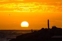 Spectateurs aviaires au lever de soleil photos stock