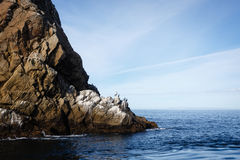 Spectateurs de dessus - les pélicans se reposent sur des roches à la base de la falaise dans l'océan pacifique Photo libre de droits