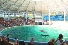Spectators on representation in the dolphinarium Royalty Free Stock Images