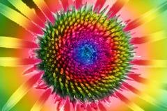 Spectre de couleur sur une fleur de Rudbeckia Photographie stock libre de droits