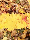A spectrum of colors of autumn leaves stock photo