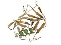 Specyfika antygen (PSA) Zdjęcia Stock