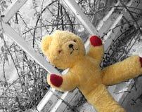 Spedisca in franchigia l'orso Fotografie Stock Libere da Diritti