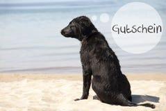 Dog At Sandy Beach, Gutschein Means Voucher Stock Photos