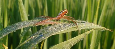 Speechless spider stock photo