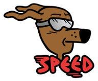 Speed dog Royalty Free Stock Image