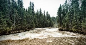 Speed river in forest stock images