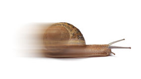 Speed snail Royalty Free Stock Photography