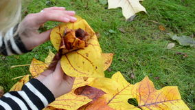 Speed up woman hands make decor flower  autumn tree leaves stock footage