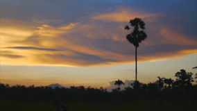 Speed video of colorful twilight  sky with sugar palm tree. At Songkhla,Thailand stock video footage