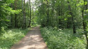 Bicycle rides along narrow path past bushy trees in park. Speeding bicycle rides along narrow path past bushy trees in park and sun rays pass through leaves stock video footage