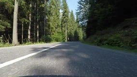 Speeding car trough fir forest stock video