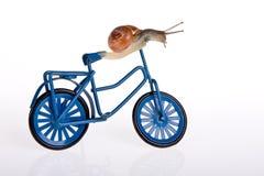Speeding up. Funny snail trying alternative transport on a bike Stock Photos