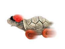 Speedy cool tortoise in cap and sunglasses