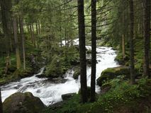 Speedy creek in the pinetree forest. Stock Photography