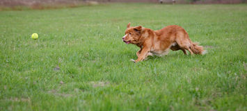 Free Speedy Dog Stock Image - 25412601