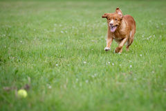 Speedy dog Stock Images