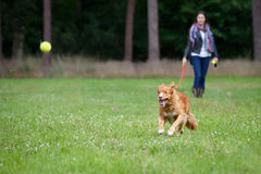 Speedy dog Royalty Free Stock Photography
