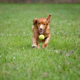 Speedy dog Stock Photos