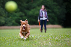 Speedy dog Royalty Free Stock Image