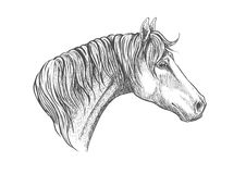 Speedy racehorse of american quarter breed sketch. Racehorse head sketch icon for horse racing or another equestrian sporting activities symbol design with Stock Photography