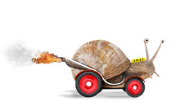 Speedy snail Stock Photos