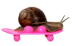 Speedy snail like car racer. Concept of speed and success. Wheels are blur because of moving. Grape Snail riding on a Stock Images