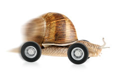 Speedy snail on wheels. With partial motion blur and white background Royalty Free Stock Images