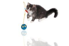 Speel tijd voor leuk katje 10 Stock Foto's