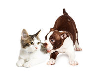 Speels Puppy en Geërgerd Katje Stock Foto