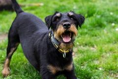 Speels weinig hond royalty-vrije stock afbeeldingen