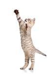 Speelse grappige kat op witte achtergrond Royalty-vrije Stock Foto