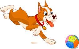 Speelse hond Royalty-vrije Stock Foto